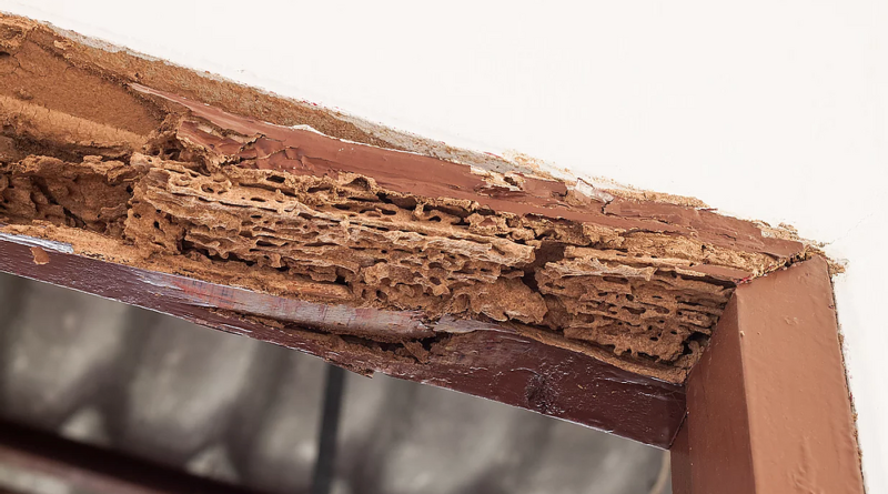 Some ways to Keep Termites Away From Your Wooden Furniture